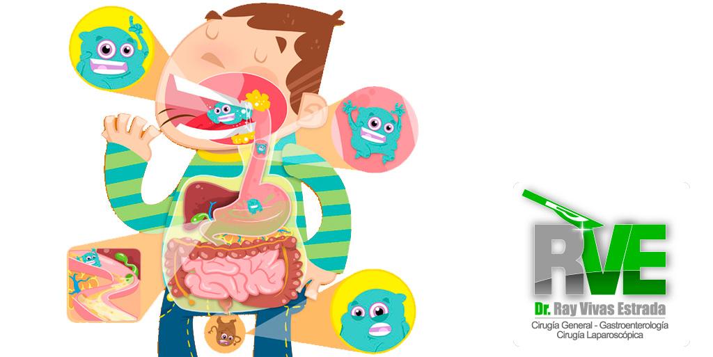 Un día en la vida de tu aparato digestivo